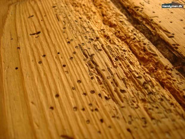 Seriøst Borebiller kan bekæmpes | Bekæmpelse af borebiller og orm i træ MK86