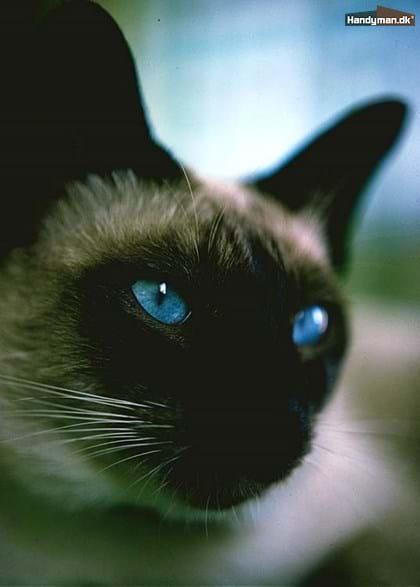 fjern lugt af kattetis